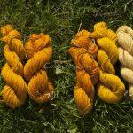 Farvegåseurt på uld
